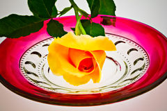 Single yellow rose sits on antique ruby glass plate (P) Royalty Free Stock Image