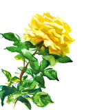 Single yellow rose Stock Photography