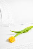 Single Yellow Tulip Stock Images