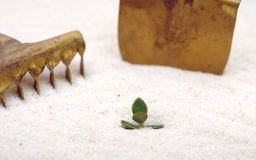 Single young plant sprouting from of sand Royalty Free Stock Image