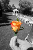 Singled Out. A single rose used in a wedding Royalty Free Stock Photo