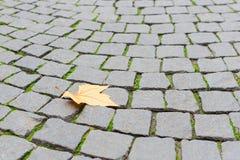 Singola caduta della foglia di giallo dell'acero di autunno sul paveme pavimentato del ciottolo Immagini Stock Libere da Diritti