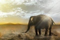 Singola camminata dell'elefante Immagini Stock Libere da Diritti