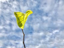 Singola foglia verde sul ramo contro cielo blu Fotografie Stock