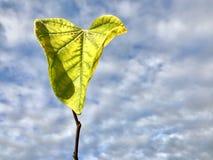 Singola foglia verde sul ramo contro cielo blu Fotografia Stock