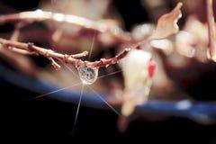 Singola goccia di pioggia con la stella sul ramo immagine stock