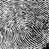 Singola impronta digitale Immagine Stock Libera da Diritti