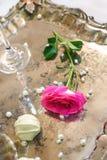 Singola menzogne piacevole della rosa di rosa fotografia stock