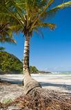 Singola palma su una spiaggia Fotografie Stock