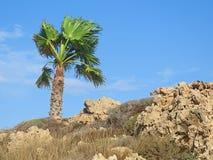 Singola palma sulla metropolitana asciutta pietrosa beige con il cielo nuvoloso blu immagine stock