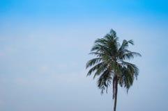 Singola palma sulla spiaggia contro cielo blu Fotografia Stock Libera da Diritti