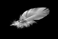 Singola piuma bianca 3 Fotografia Stock