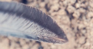 Singola piuma sulla sabbia Immagini Stock