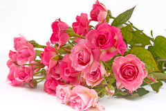 Singola rosa di colore rosa isolata Fotografia Stock