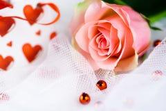 Singola rosa perfetta romantica di rosa Fotografie Stock Libere da Diritti