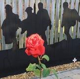 Singola Rosa rossa Immagini Stock