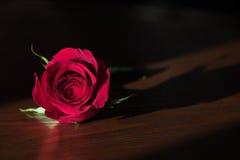 Singola rosa rossa su una superficie di legno Fotografia Stock Libera da Diritti
