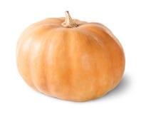 Singola zucca arancione Fotografia Stock