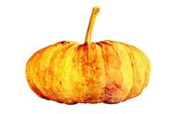 Singola zucca fresca isolata su fondo bianco Fotografie Stock Libere da Diritti