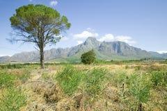 Singoli albero e montagne nella regione del vino di Stellenbosch, fuori di Cape Town, il Sudafrica Fotografia Stock