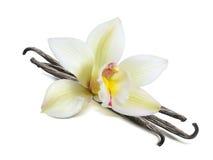 Singoli baccelli del fiore della vaniglia isolati Fotografie Stock