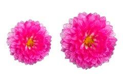 Singoli fiori con l'insieme della raccolta isolato gocciolina, concetti di stagione delle pioggie fotografia stock libera da diritti