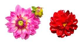 Singoli fiori con l'insieme della raccolta isolato gocciolina, concetti di stagione delle pioggie immagine stock libera da diritti