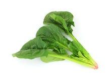 Singoli spinaci del gambo Fotografia Stock