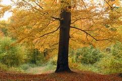 Singolo albero Fotografie Stock Libere da Diritti