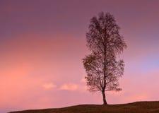 Singolo albero Fotografia Stock Libera da Diritti