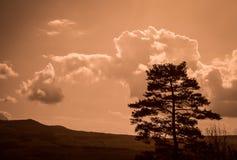 Singolo albero Immagine Stock