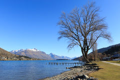 Singolo albero alla spiaggia di Franton, Queenstown, Nuova Zelanda Immagine Stock