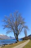 Singolo albero alla spiaggia di Franton, Queenstown, Nuova Zelanda Fotografie Stock Libere da Diritti