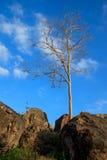 Singolo albero asciutto Immagine Stock