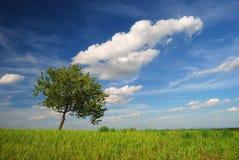 Singolo albero con le nuvole Immagini Stock