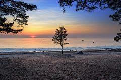 Singolo albero contro il tramonto al golfo di Finlandia immagini stock libere da diritti
