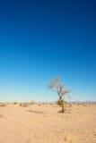 Singolo albero in deserto fotografie stock