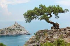 Singolo albero di pino, Ucraina, Crimea immagine stock libera da diritti