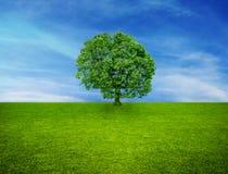 Singolo albero ed il cielo Fotografia Stock Libera da Diritti