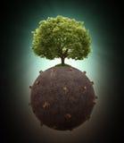 Singolo albero lasciato su un globo disboscato Immagini Stock Libere da Diritti