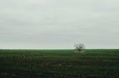 Singolo albero nel campo Fotografie Stock Libere da Diritti