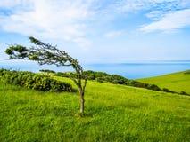Singolo albero nel giorno ventoso Fotografia Stock Libera da Diritti