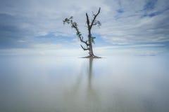 Singolo albero nel mare Fotografia Stock