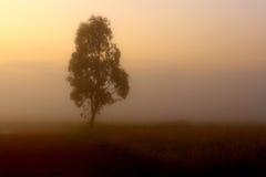 Singolo albero nella foschia Fotografie Stock Libere da Diritti