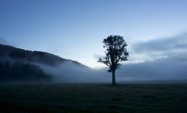 Singolo albero nella nebbia fotografie stock libere da diritti