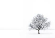 Singolo albero nella nebbia con hoar-frost Fotografia Stock