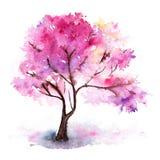 Singolo albero rosa di sakura della ciliegia dell'acquerello Fotografia Stock
