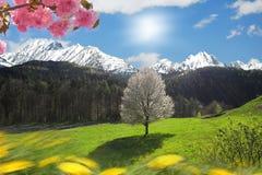 Singolo albero sbocciante contro il sole Fotografie Stock Libere da Diritti