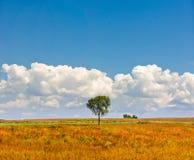 Singolo albero sotto un cielo blu Fotografia Stock Libera da Diritti
