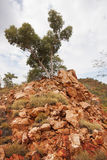 Singolo albero su Rocky Outcrop Fotografia Stock Libera da Diritti